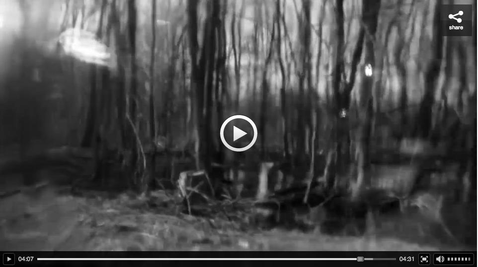 HF-Woodepecker-video